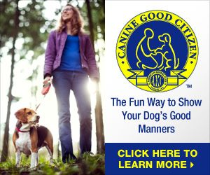 Canine Good Citizen Cgc Sick Dog Therapy Dogs Dog Training