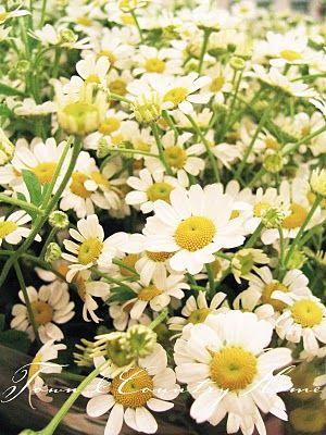 TOWN COUNTRY HOME: Blumenmarkt Teil 2 ...