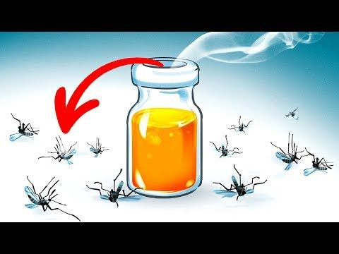 15 Natural Ways To Get Rid Of Mosquitoes In Your Yard Youtube