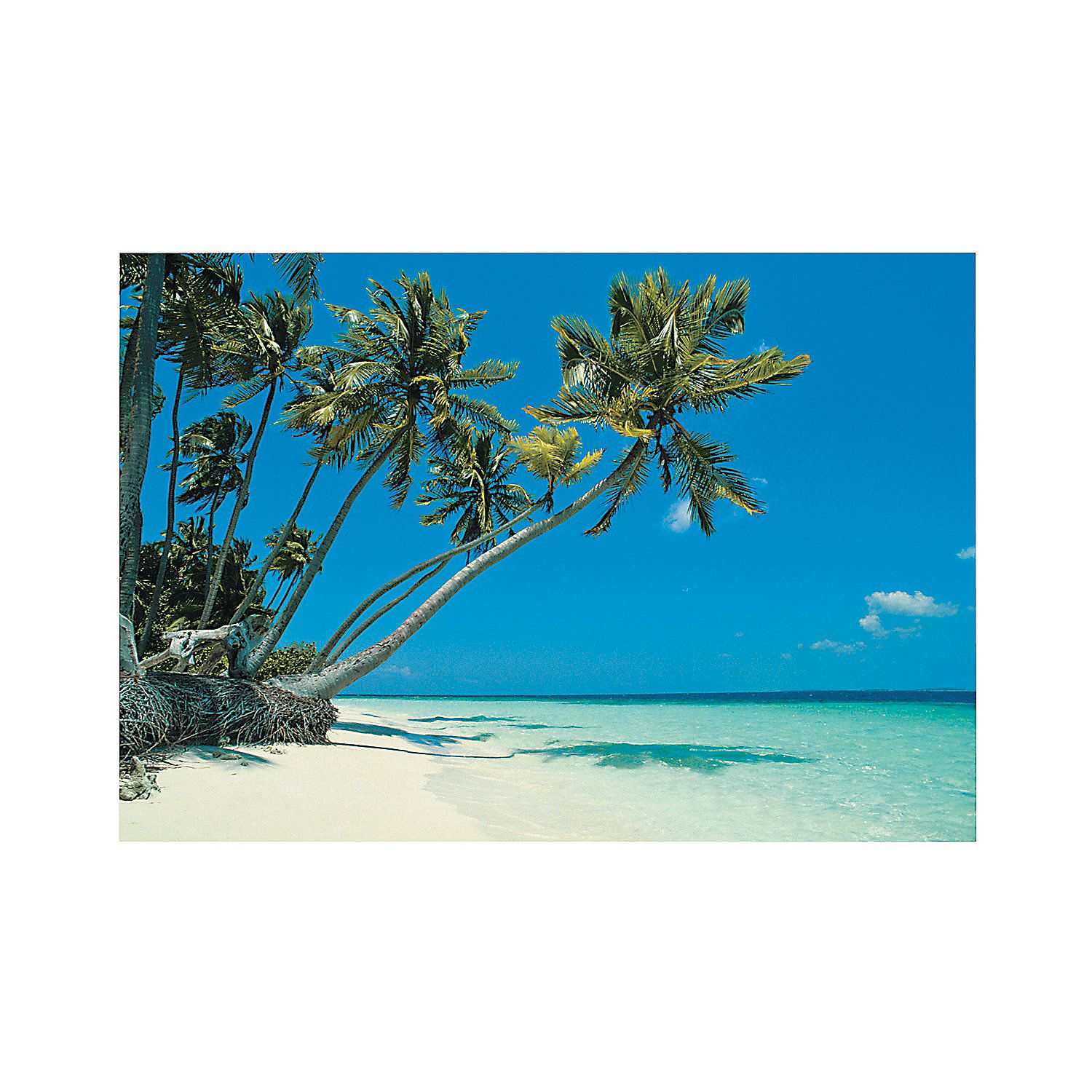 Party Island Beach: Tropical Beach Backdrop Banner