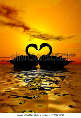 swans and sunsets images | Two swans forming a heart under the sunset - stock photo