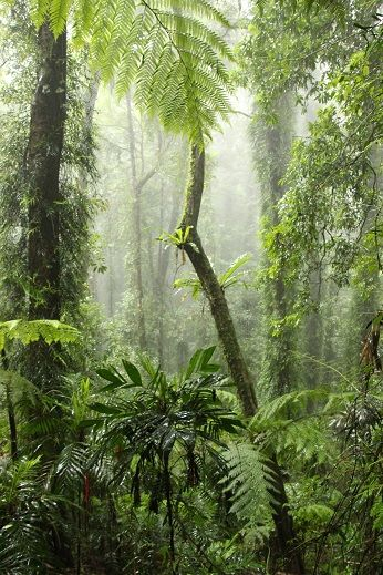 Dorrigo National Park - rainforest in the rain