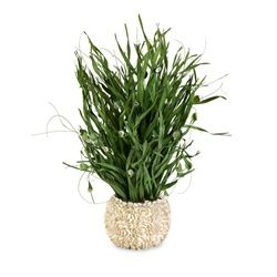 Nautical Sea Grass Plant with Cayman Shell Accents in a White Floral Vase