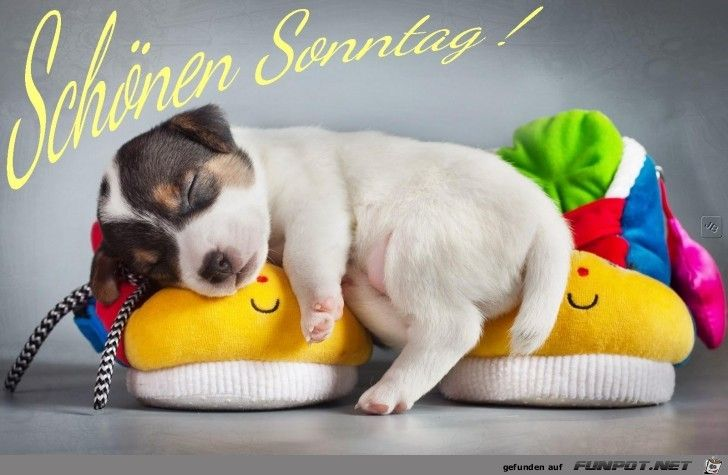 Sonntag Cute Dogs Dogs Dog Wallpaper