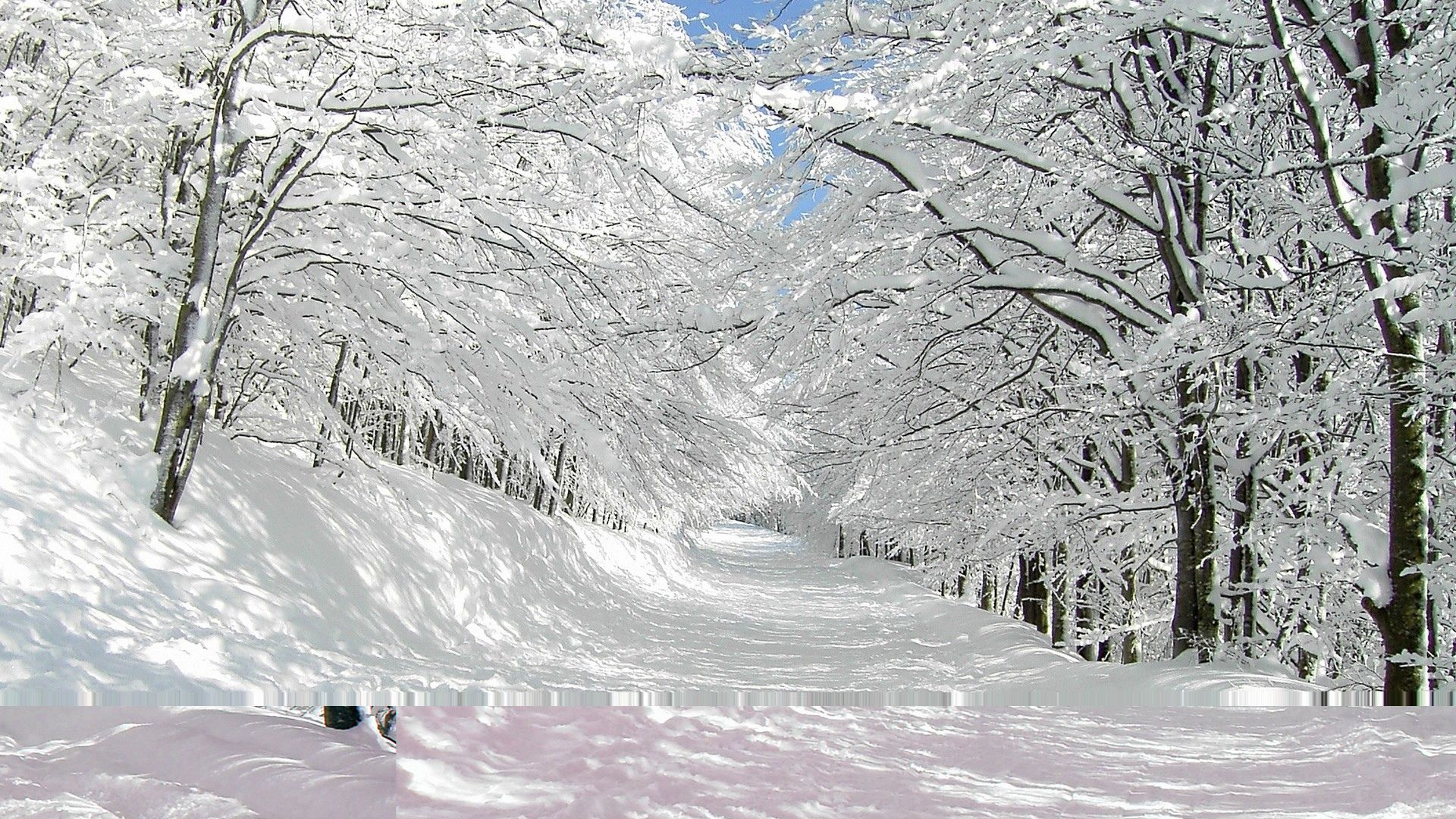 Nature landscapes winter snow trees forest white roads