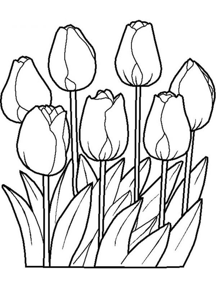 Spring Flowers Coloring Pages Print Everyone Dreams Of Spring Flowers During Winter And Look Forward To The Charm Of The Halaman Mewarnai Bunga Bunga Sketsa