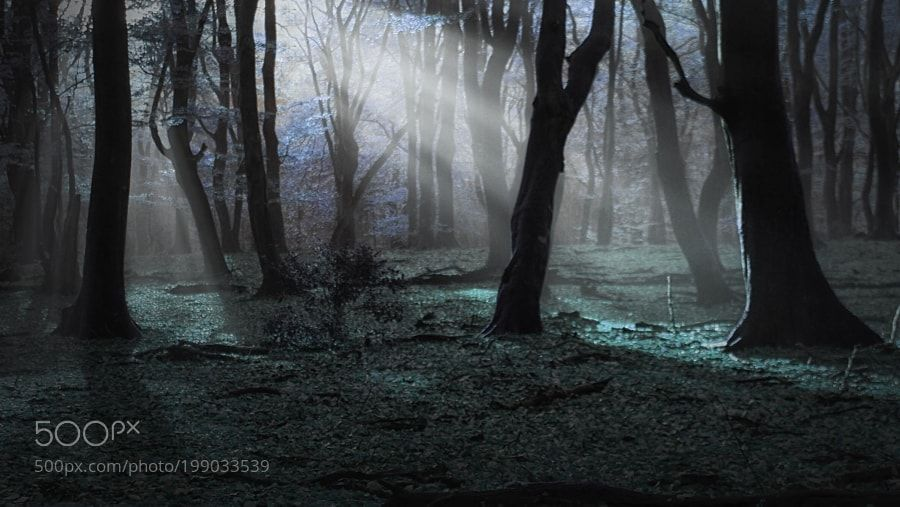 Forest Dream by sdingemans49