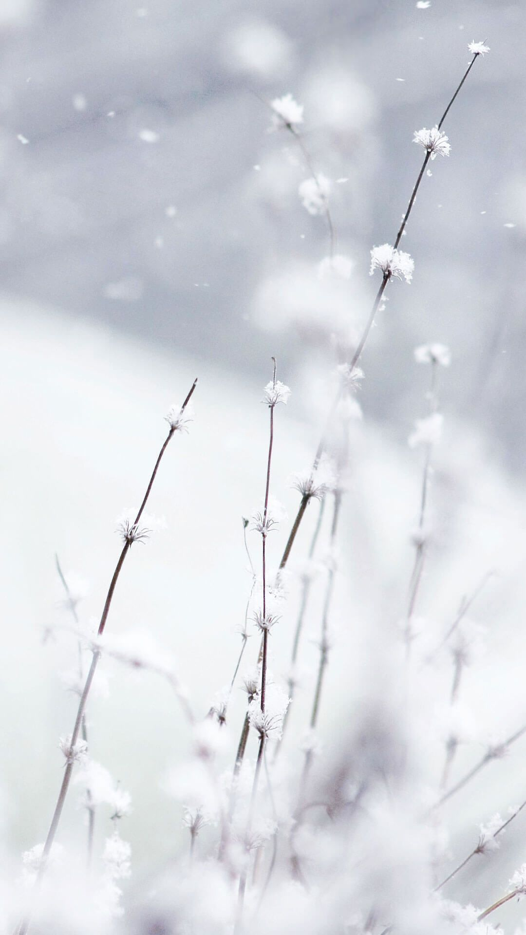 Winter Snow Wallpapers In 2019 Snow Wallpaper Iphone