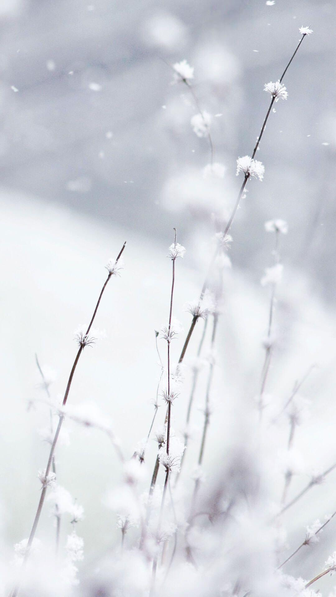 Flowers In Snow Wallpaper Iphone 6 Hd Winter Snow Wallpaper
