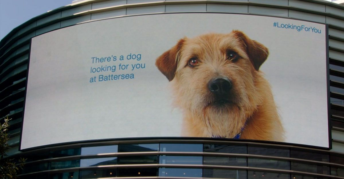 Because these homeless dogs and cats are lookingforyou