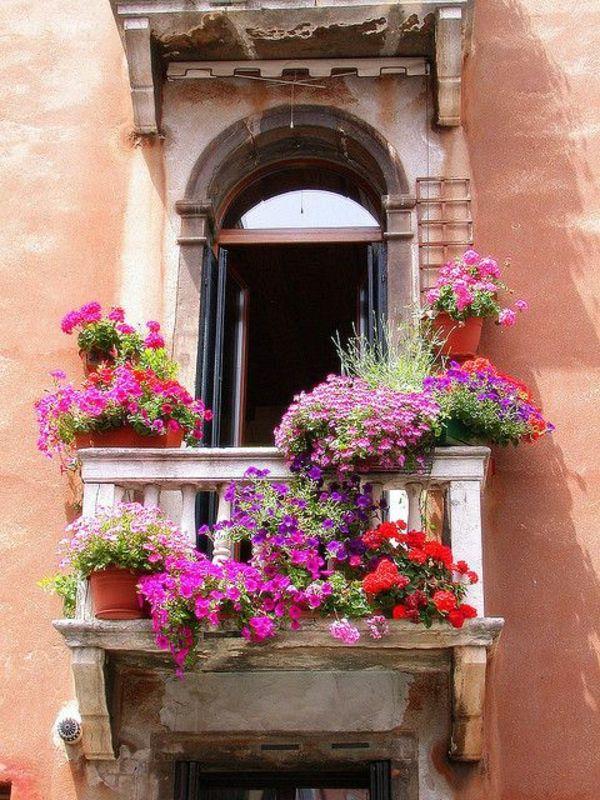 pflegeleichte balkonpflanzen den balkon leicht und schnell versch nern pinterest. Black Bedroom Furniture Sets. Home Design Ideas