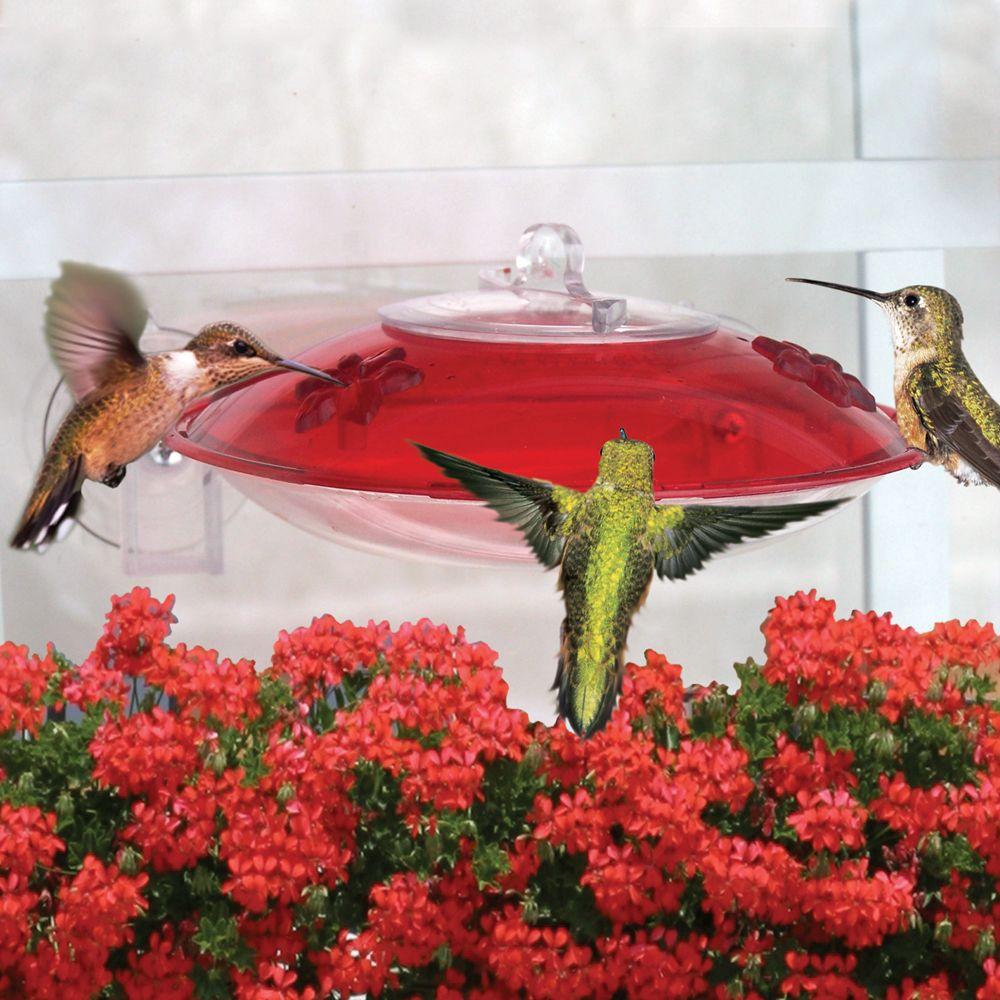 Window Hummer 3 Hummingbird Feeder (WH3) Humming bird