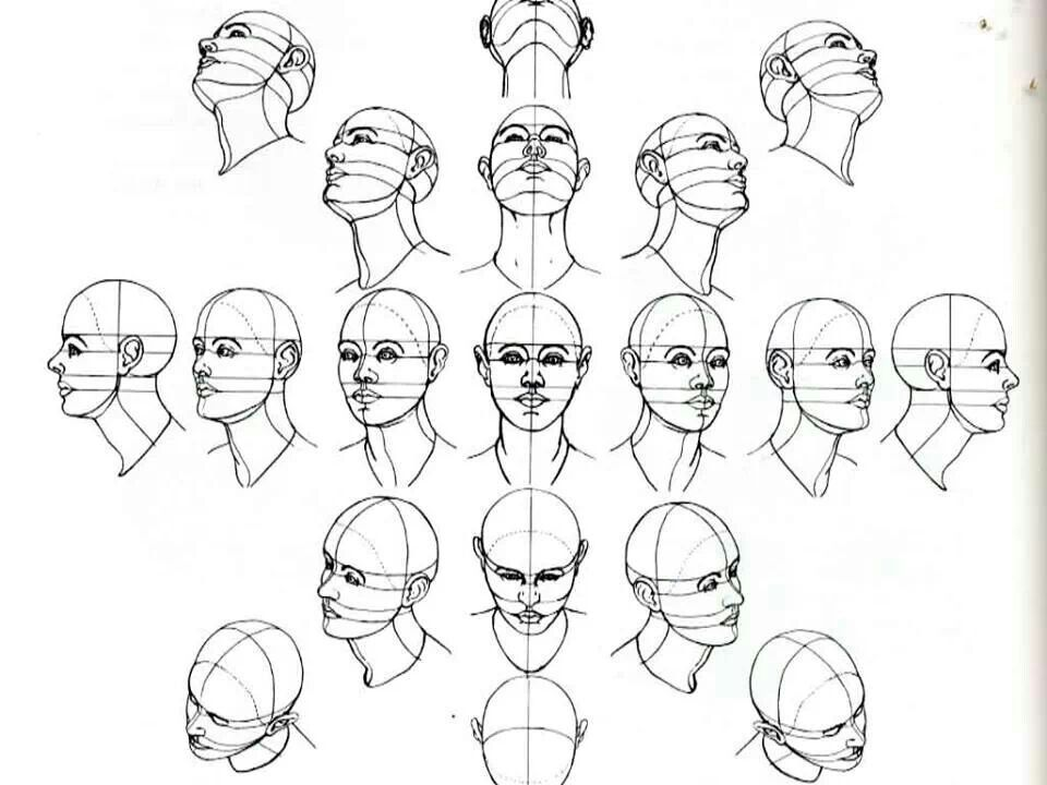 Head Perspective Drawings Drawing The Human Head Brain Drawing