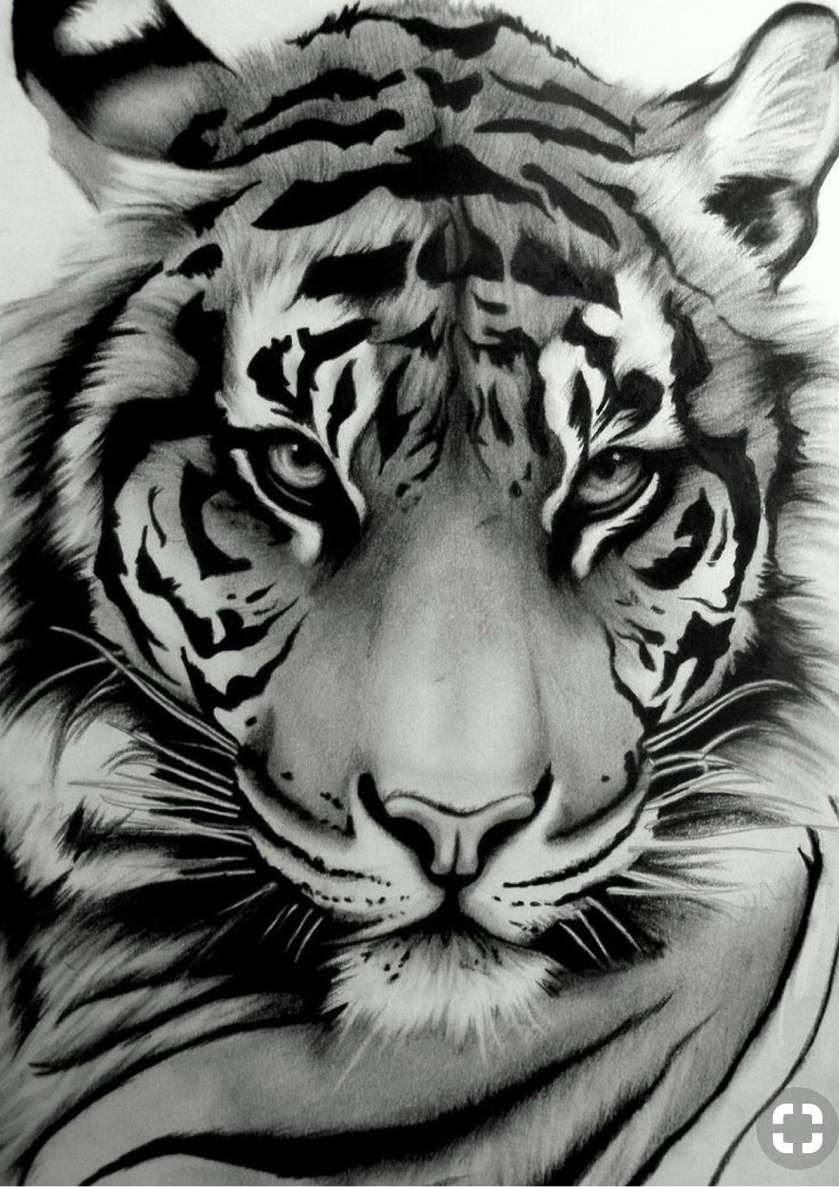 Pin Von Ru Klimowicz Auf Tattoo Tierkunst Tiger Zeichnung Tierzeichnung