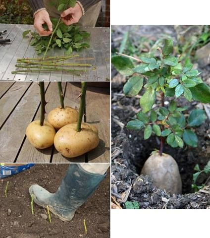 Construccion Y Manualidades Esquejes De Plantas Jardineria Y Plantas Cultivo De Plantas