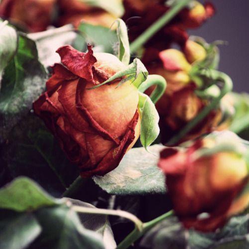 (2) Likes | Tumblr