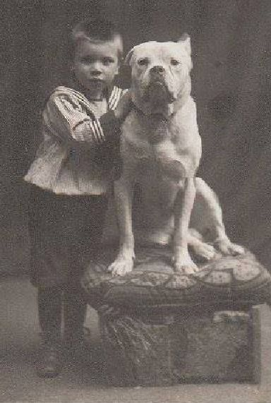 Bulldog Circa 1900 Bulldog Old English Bulldog Old Dogs