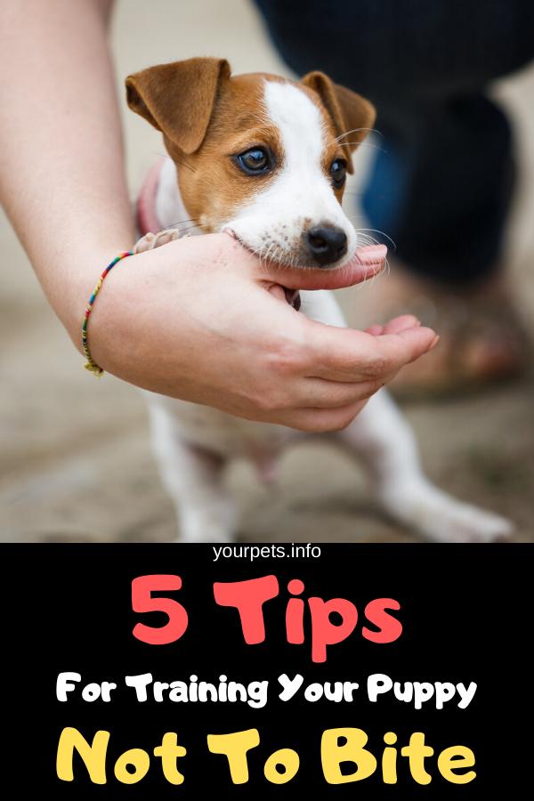 db71d648d062a2be480f007ebf816f1e - How To Get A Dog To Stop Aggressive Biting