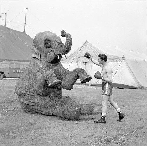 """2. Imagens revelam vida na Grã Bretanha do século XX """"Do usual ao engraçado e até mesmo bizarro, veja a seguir uma seleção de fotos de coisas inusitadas que os moradores da Grã Bretanha faziam cotidianamente. Além disso, invenções muito inovadoras para a época e que agora já estão utrapassadas não foram esquecidas. Aqui, Birba, a elefanta de circo, interage com o campeão de boxe Wally Swift durante uma visita dele ao Circo Billy Smart."""""""