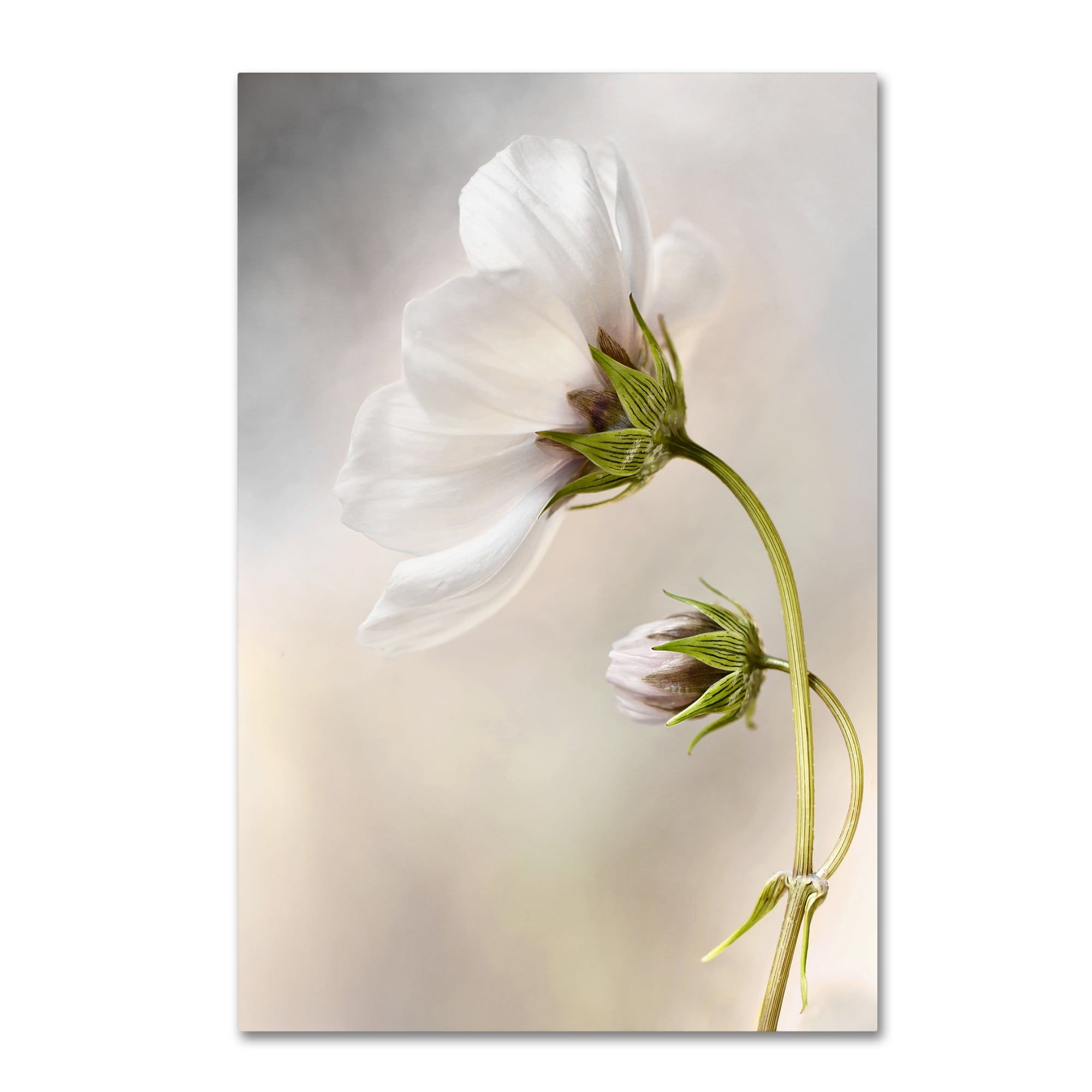 Mandy disher uheavenly cosmosu canvas art products pinterest