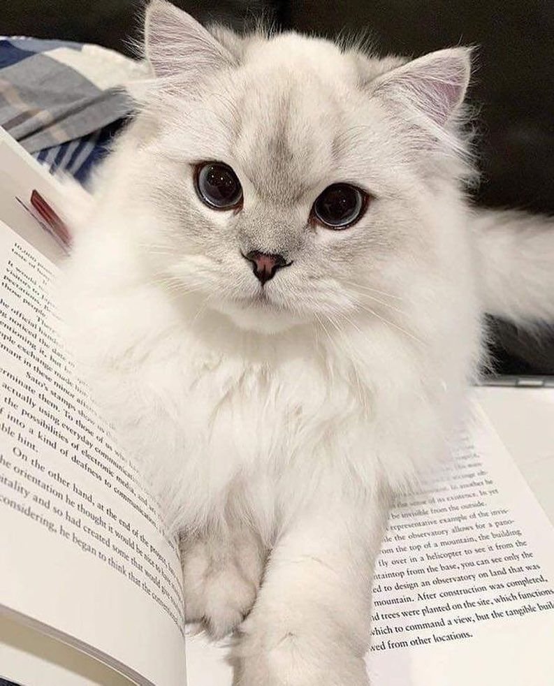 Cute and funny Cat Tag your Friends