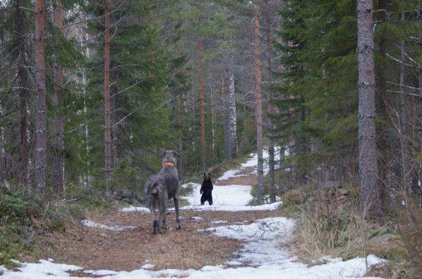 Karhun kuvannut nainen: En uskonut, että tästä nousisi tällainen haloo