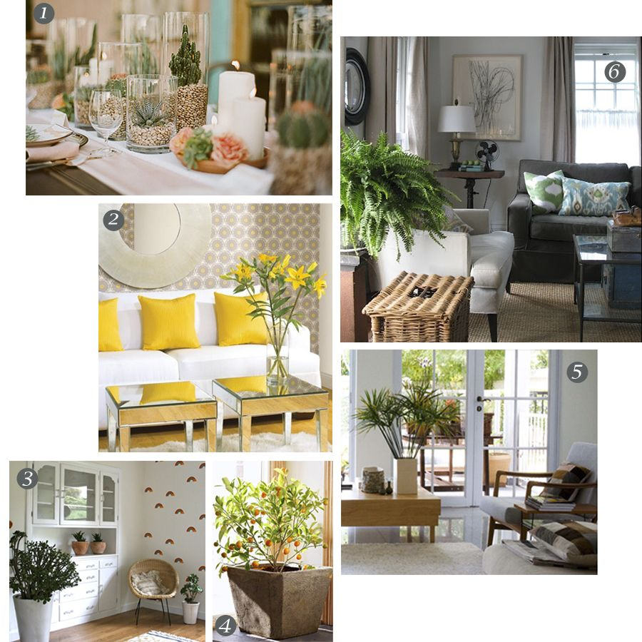 Decorating Dilemma House Plants: Indoor Plant Decorating Ideas