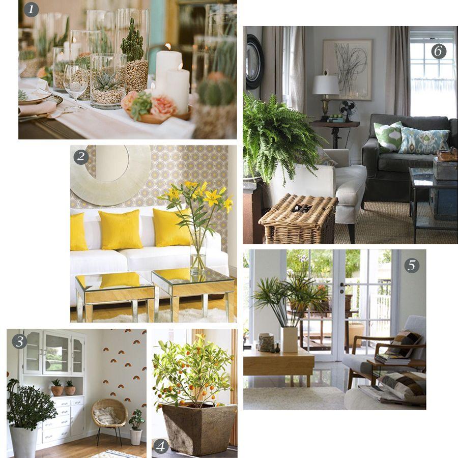 Ordinaire Indoor Plant Decorating Ideas | Indoor Plant Decoration Ideas Inexpensive  Decorating