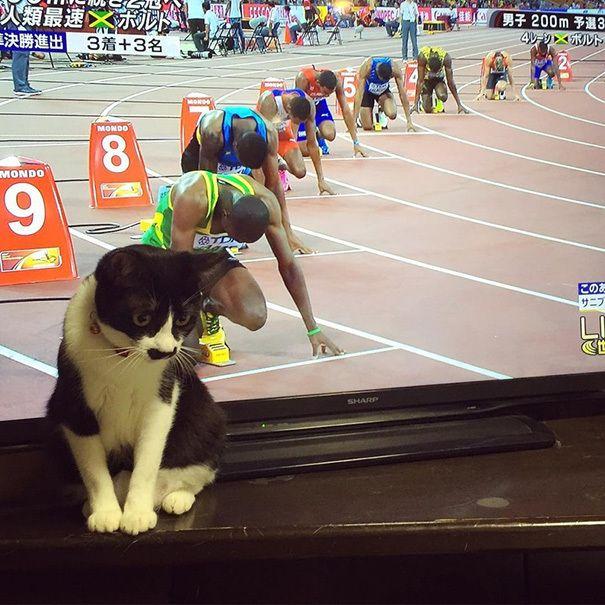 Uêba V10: Fotos de gatos, feitas no momento ou na perspectiva perfeita!