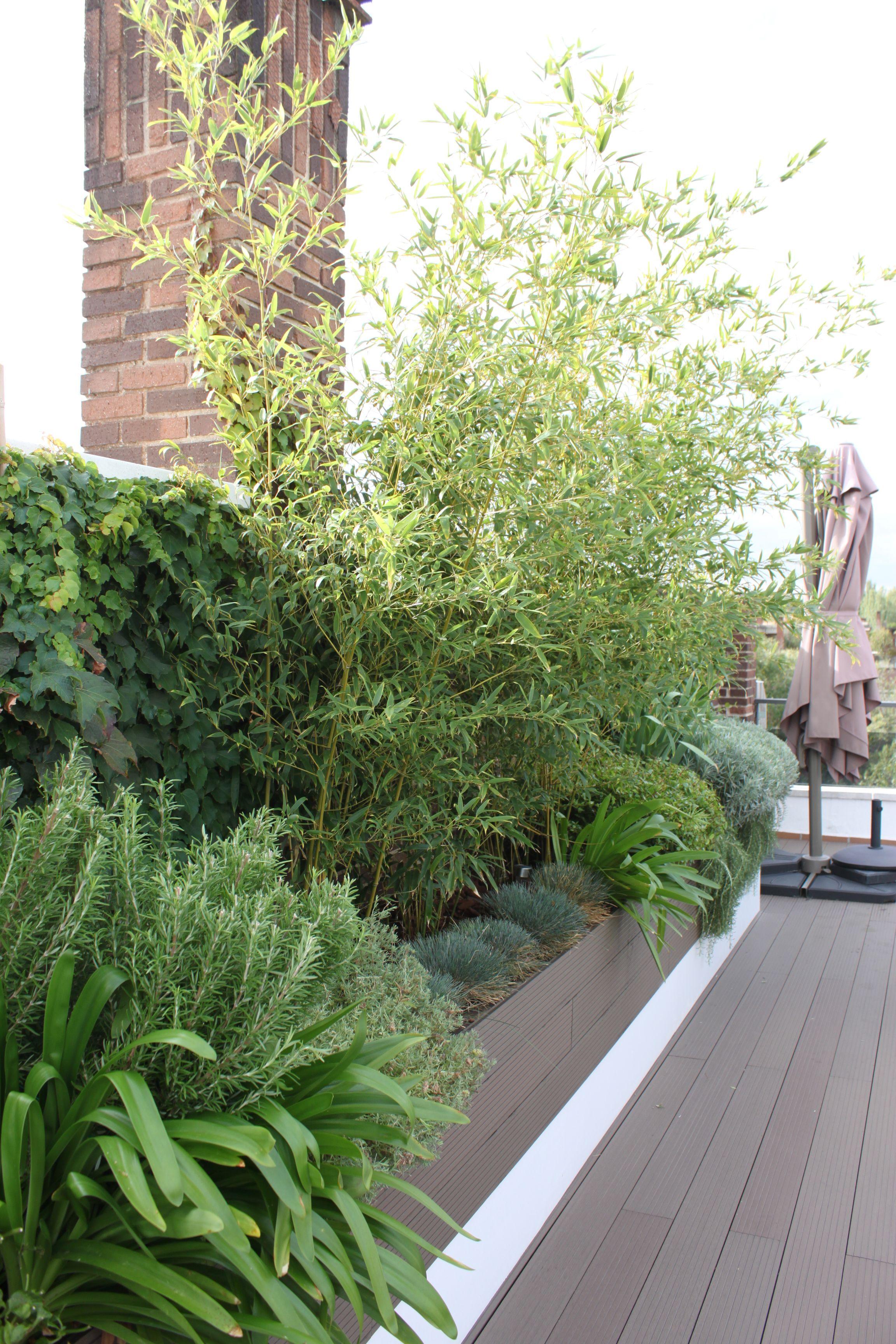 Jardin en atico paisajismo jardines la habitacion verde - Jardines en aticos ...