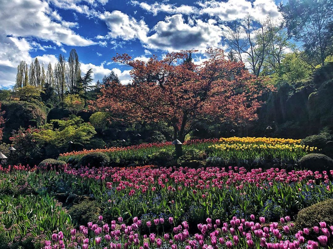 """@betterwithadventure on Instagram: """"Butchart Gardens is without a doubt the best place on the island to see the most beautiful and the largest variety of flowers and plant…"""""""