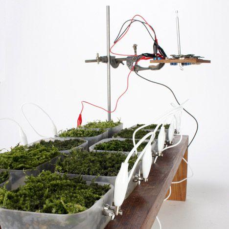 Plant Powered Bio Solar Panels Powers Radio Possibly Your Home Solar Panels Green Power Diy Solar