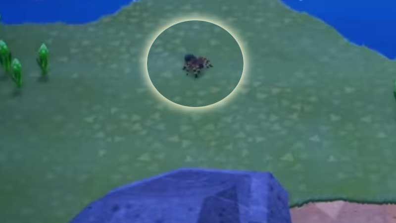 Animal Crossing New Horizons Cheat To Get Infinite Tarantula Which