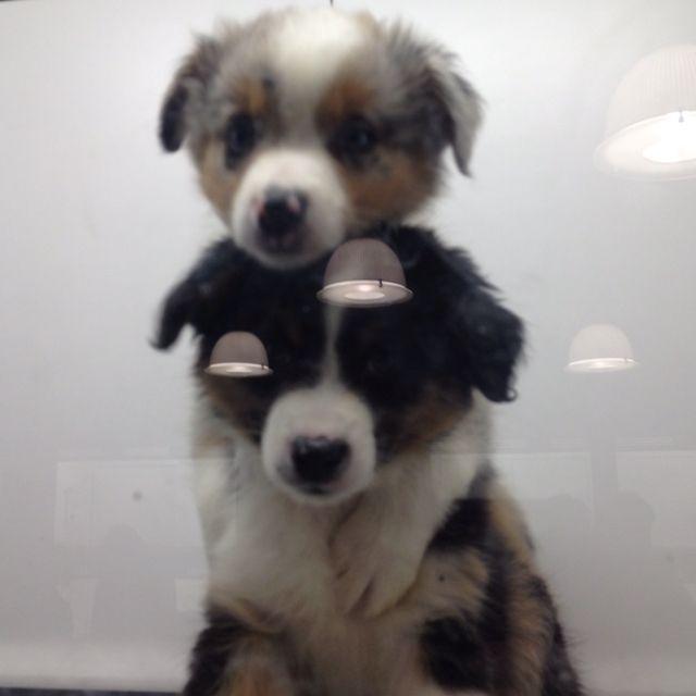 Puppies on puppies on puppies
