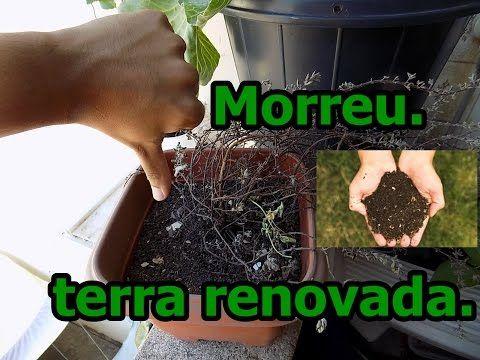 Mandamento da Horta: Minha Planta Morreu o que Fazer? - YouTube