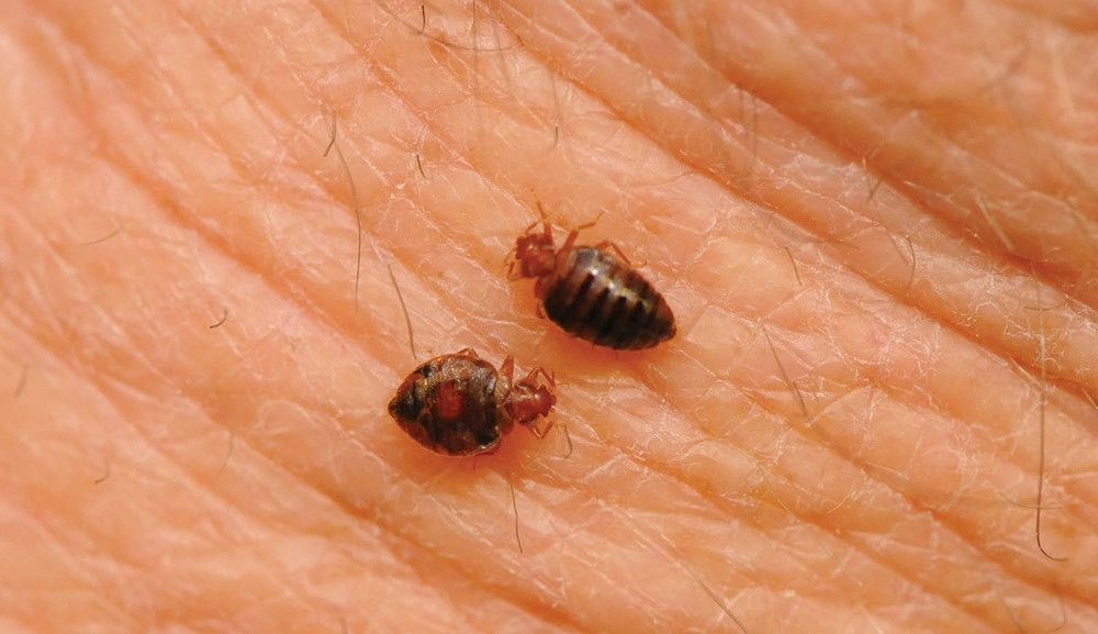 I Spent Months Battling Bedbugs And Years Trying To Get Them Out