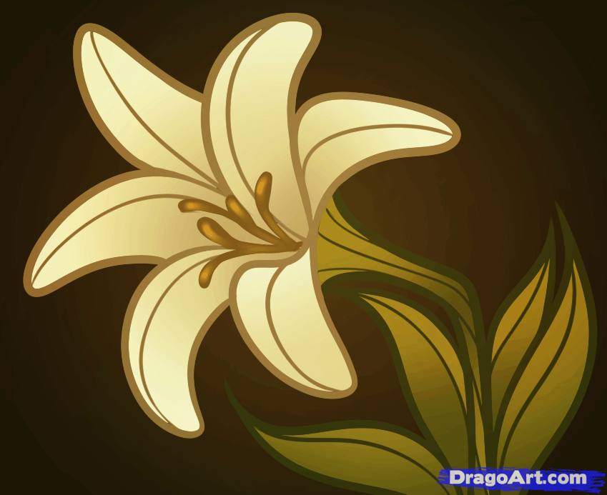 lily flowers drawings Lily Flower Drawing Color How to