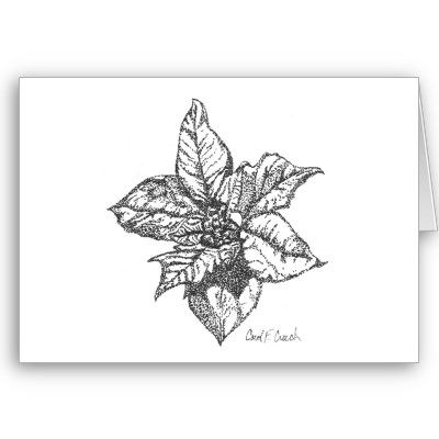 Custom cards featuring my original botanical drawing of a poinsettia flower in ink. Starting at $2.60 for note card size; $3.15 for greeting card size. Quantity discounts available. Quantity can be of different designs and you can save on 10+ ordered.