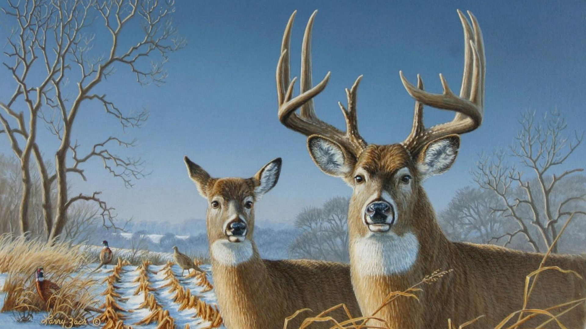 Deer HD Wallpapers Images Pictures Photos Download Олень