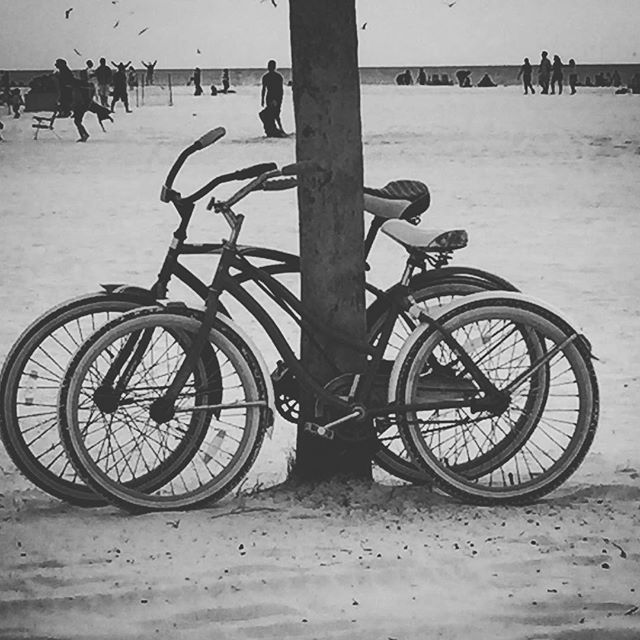 #bike riding at #siestakey #beach. Always a great time!  #vacationrental #altezvacations #adventuretravel #naturelovers #beachlife #villaforrent #vacationmemories #sarasota #beachtravel #funinthesun