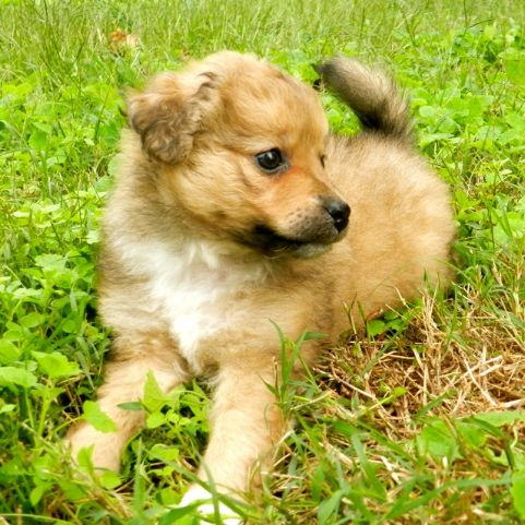 Adopt Muffy Puppy On Puppies Animals Pet Adoption