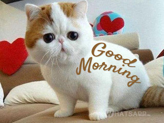 good morning monday - Cerca con Google