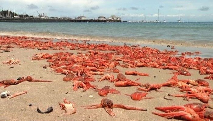 It may be an impressive spectacle, but it's a bad sign for fishermen. (Source: KOIN/CNN)