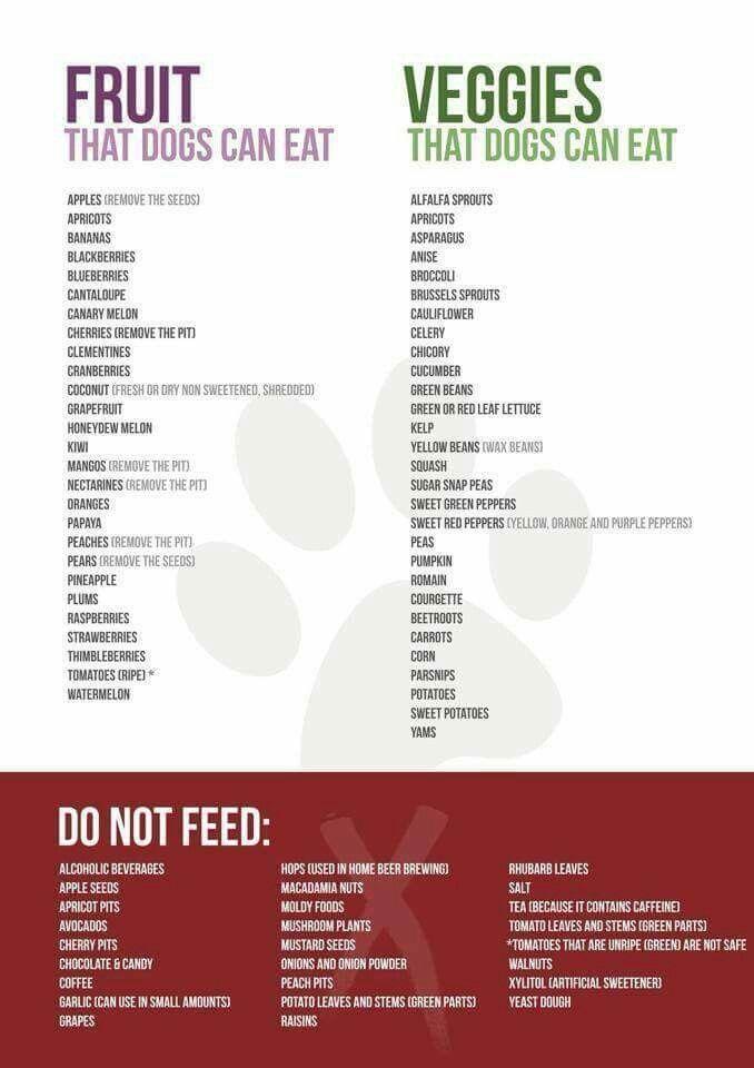 Wat kan je hond wel en niet eten als beloning