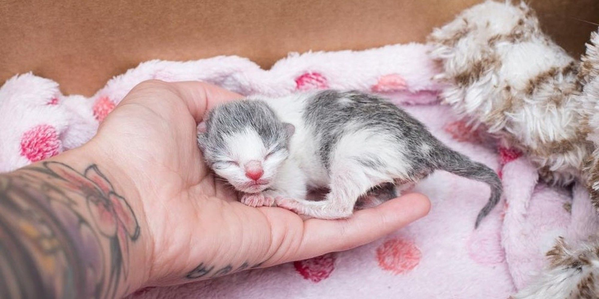 Tiniest Orphaned Kitten Holds Onto His Rescuer For Love Then And Now Love Meow Kittens Cutest Baby Cute Baby Animals Baby Kittens