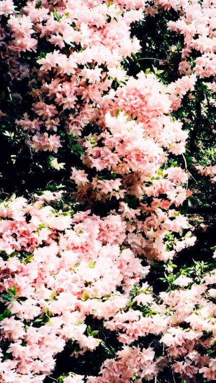 Pin De u00d8u00a7u00d9u0084u00d9u0084u00d9u0087 En Flowers Pinterest