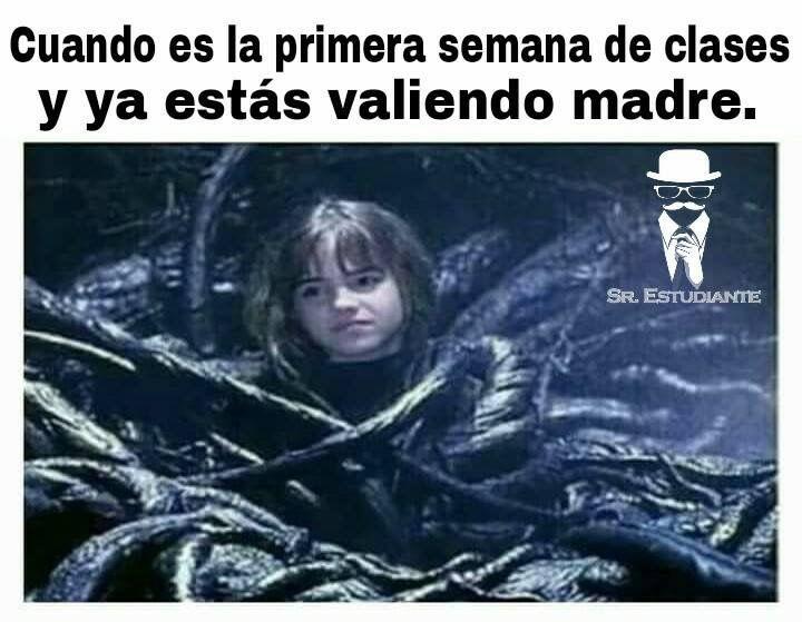 Pin De Regina Velazquez En F Gracioso Memes Memes Graciosos