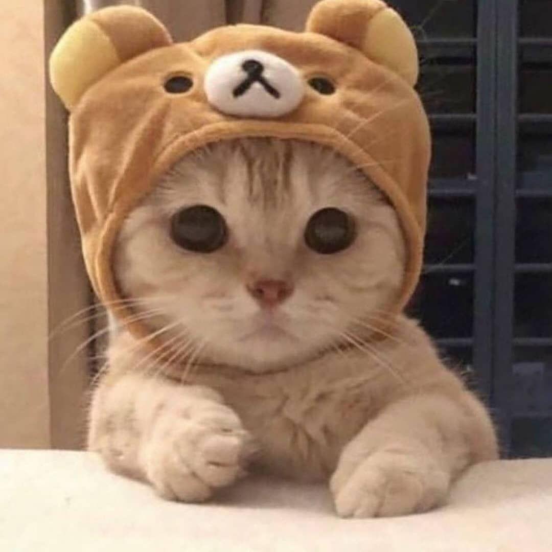 Gefallt 138 Mal 4 Kommentare Susse Baby Katzen Katzenbabys Auf Instagram Babykatze Sussekatze Babykatzen Susse Hunde Und Katzen Baby Katzen Susse Tiere