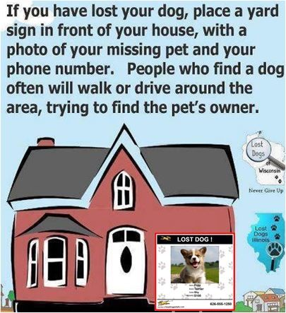Pin By Fetch Pet Care South Hills Of Pittsburgh On Pet Facts