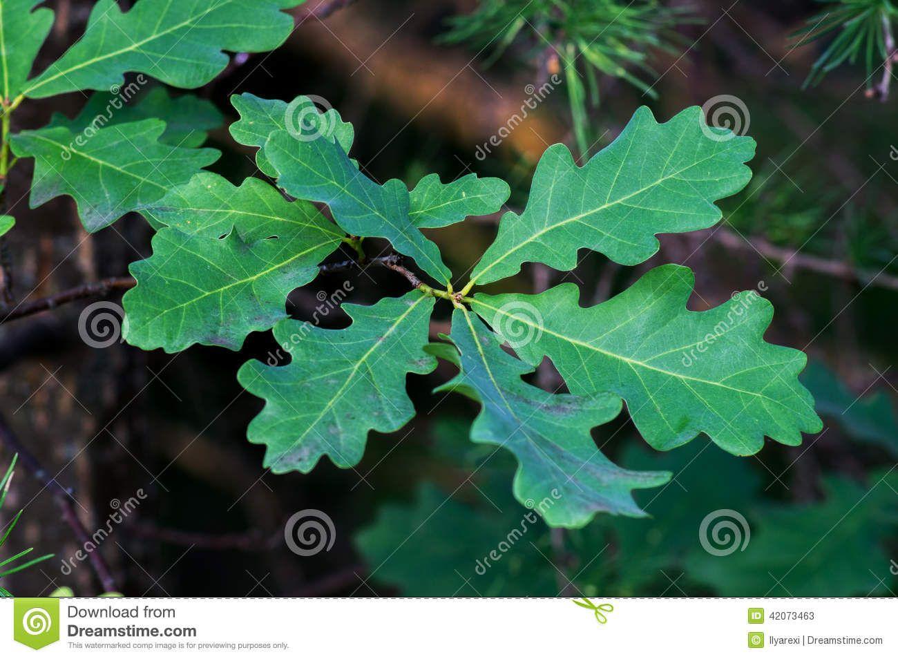 Dreamstime Comp image instructions Plant leaves